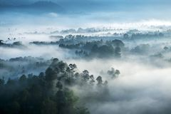 Dimmig skog som ses från överkant på morgonen Royaltyfri Foto