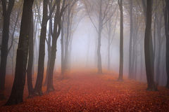 Dimmig skog under höst royaltyfri foto