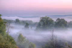 dimmig skogliggande arkivfoton