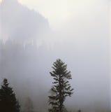 Dimmig soluppgång, montering Rainier National Park, Washington Arkivfoto