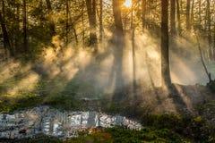 Dimmig soluppgångmorgon i skog arkivfoto