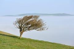 dimmig tree royaltyfria foton