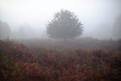 dimmig tree fotografering för bildbyråer