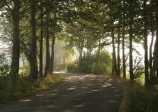 dimmig väg Fotografering för Bildbyråer