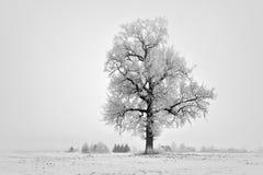 dimmig vinter för dag field treen Royaltyfri Fotografi
