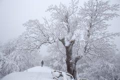 Dimmig vinterdag, man med den svarta huven och monumentalt gammalt träd arkivfoto
