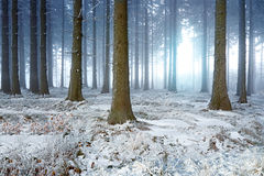 Dimmig vinterskog Royaltyfria Bilder