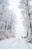 Dimmig vinterskog Arkivfoto