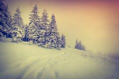 Dimmig vintersoluppgång i bergskogen Arkivfoton
