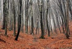 Dimmiga Autumn Forrest Royaltyfri Bild