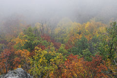 Dimmiga Autumn Forrest Arkivbilder