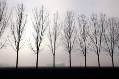 Dimmiga backlit träd Royaltyfri Foto