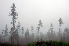 dimmiga berg för skog Royaltyfri Bild