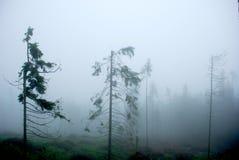 dimmiga berg för skog Royaltyfri Fotografi