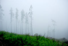dimmiga berg för skog Arkivbild