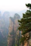 Dimmiga berg Zhangjiajie Royaltyfria Foton