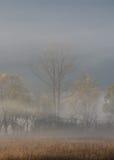 Dimmiga dalträd i nedgång Arkivbild