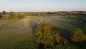 Dimmiga fält i sikt för morgonfågelöga lager videofilmer