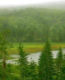 dimmiga gräsplaner Fotografering för Bildbyråer