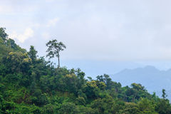 Dimmiga kullar för morgon Arkivfoto