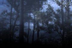 Dimmiga och mörka wooids Arkivbilder