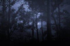 Dimmiga och mörka wooids Arkivbild
