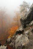 Dimmiga rocks och trees i skog Arkivbilder