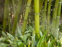 dimmiga stems för bambu royaltyfria foton