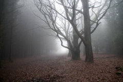 dimmiga trän Fotografering för Bildbyråer