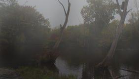 dimmiga trees arkivbild