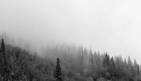 dimmiga trees Arkivbilder