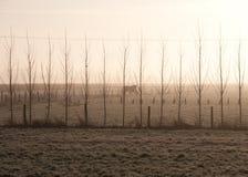 Dimmiga Trees och hästar Arkivfoto