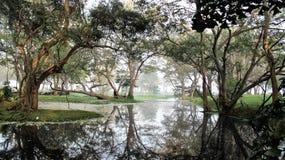 Dimmigt av naturen träsk för morgon fotografering för bildbyråer