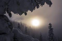 Dimmigt berg Forest Trees Layered med disig solnedgång royaltyfri bild