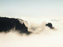 Dimmigt drömlikt landskap Den djupa dimmiga dalen i hösten Sachsen Schweiz parkerar mycket av tunga moln av tät dimma Sandsten nå royaltyfri bild