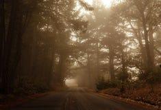 Dimmigt drev till och med skogen Royaltyfri Foto