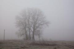 Dimmigt fältlandskap för träd Sorgsenhet- och ensamhetbegrepp Tidig vintermorgon frost på jordningen oväsenfilmeffekt royaltyfria bilder