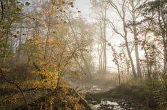 Dimmigt filtrerat ljus mot bergström Arkivfoton
