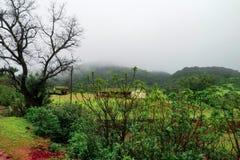 Dimmigt grönskalandskap av västra ghats, berg och grässlättar royaltyfri foto