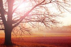 Dimmigt landskap i höstmorgon Arkivbild