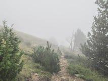 Dimmigt landskap med granbergskogen royaltyfria foton