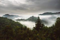 Dimmigt landskap med granskogen, Galicia, Spanien royaltyfri foto