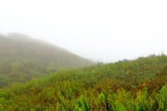 Dimmigt landskap p? ?verkanten av den Mombacho vulkan, Granada, Nicaragua fotografering för bildbyråer