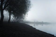 Dimmigt morgonsommarlandskap med rad av träd Dimmig morgon i landskapet för härlig natur för skog det lösa arkivfoton