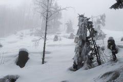 Dimmigt och mystiskt winteday i skogen fotografering för bildbyråer