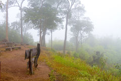 Dimmigt och träd på bergvinter Royaltyfria Bilder