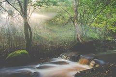 Dimmigt skog- och flodflöde arkivbilder