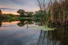 Dimmigt sommarlandskap med den lilla skogfloden royaltyfri fotografi