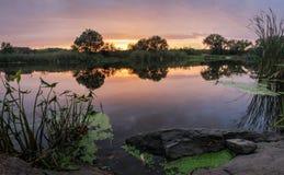 Dimmigt sommarlandskap med den lilla skogfloden royaltyfri bild