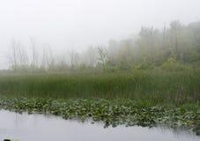 Dimmigt vårlandskap i dimman Royaltyfria Foton